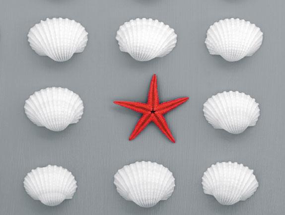 Star Fish and shells